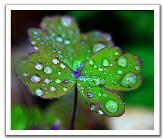 0406300032351img_5089--raindrops_t.jpg